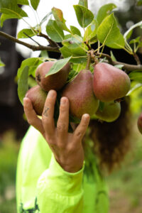 Jacquelin Suskin Pears